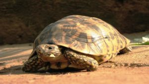 tortoise-wallpapers-hd-(1)_571d50acad85b